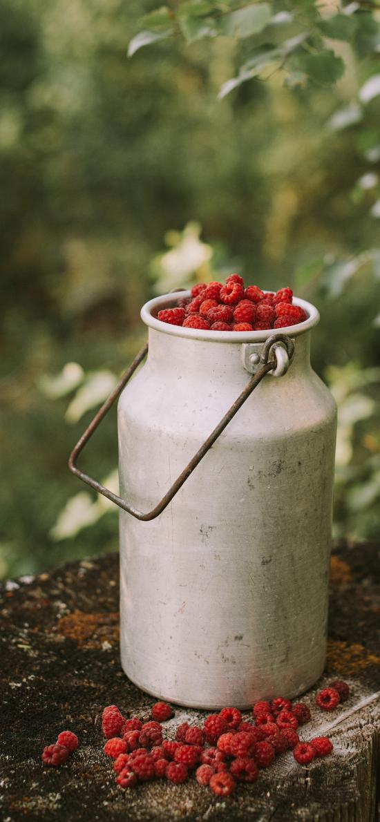 水果 树莓 美莓果 铁桶