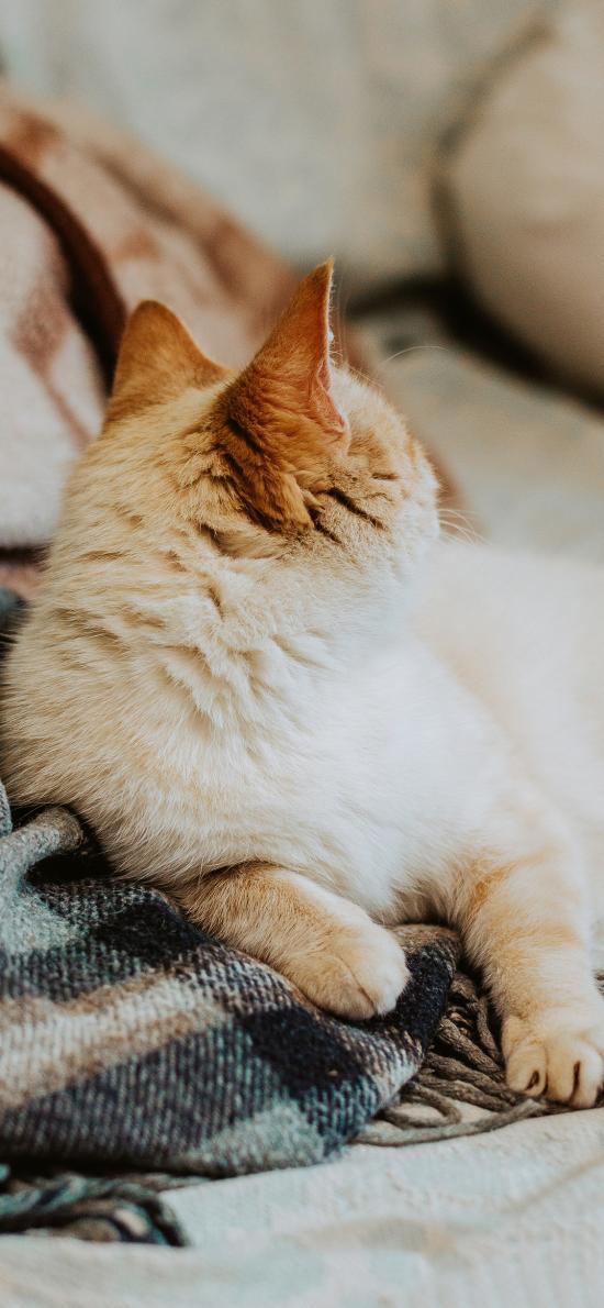 猫咪 宠物 橘猫 爪子