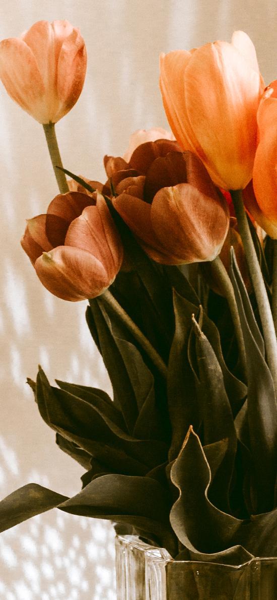 鲜花 郁金香 枝叶