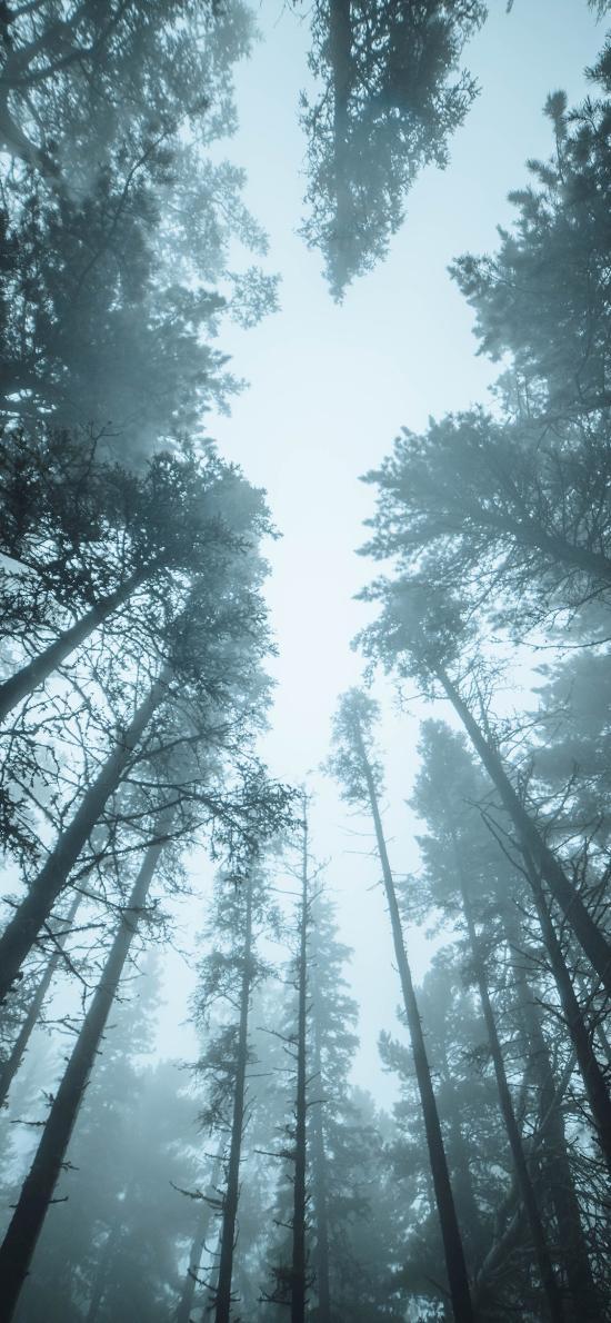 树林 早晨 雾气 森林