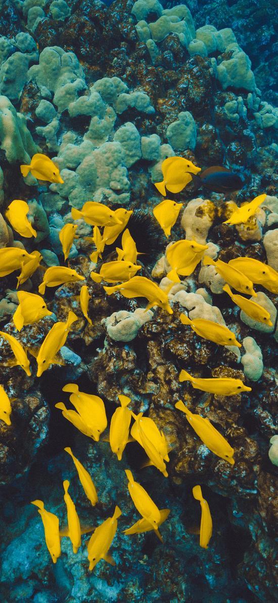 鱼群 海洋 珊瑚 色彩