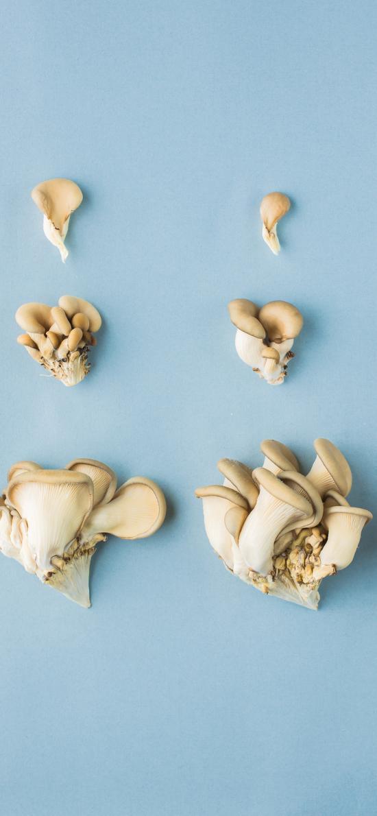 平菇 菌类 菌菇 食材