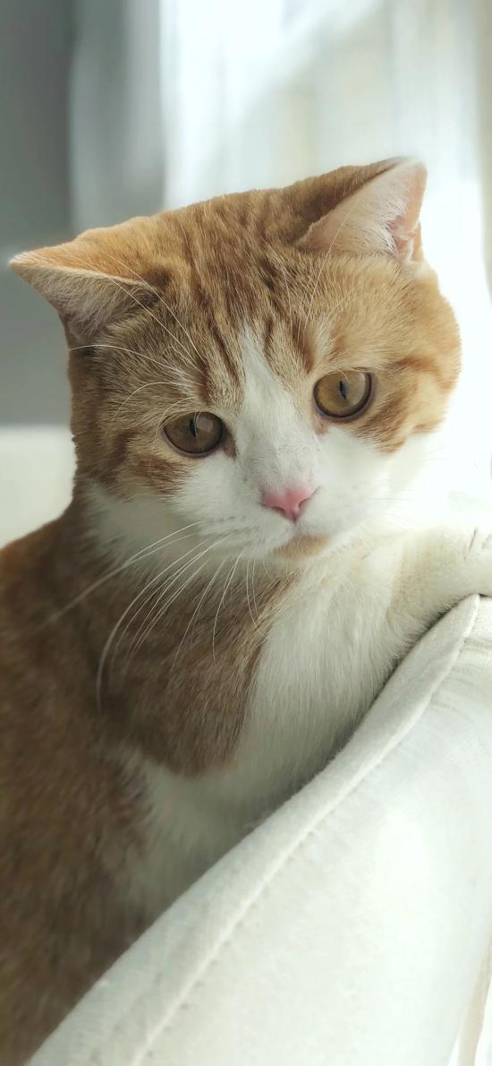 宠物 猫咪 橘猫 可爱