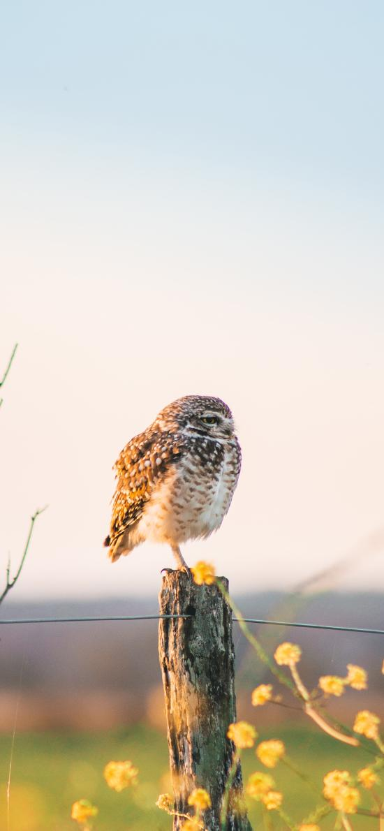 猫头鹰 站立 鸟类 夜视