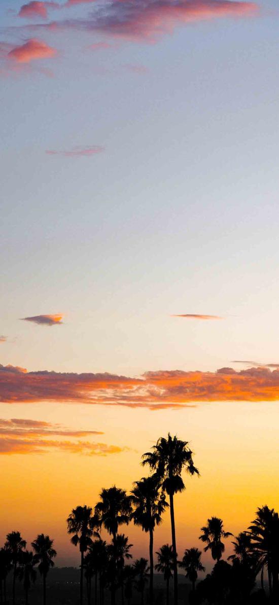 晚霞 夕陽美景 椰樹 唯美