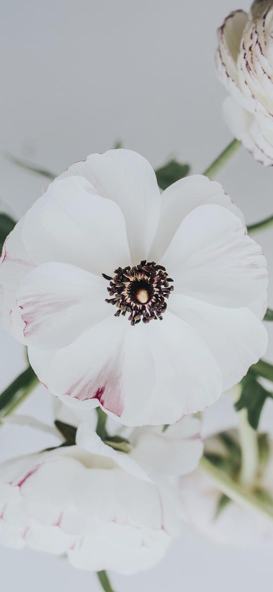 插花 鮮花 芙蓉葵 白色