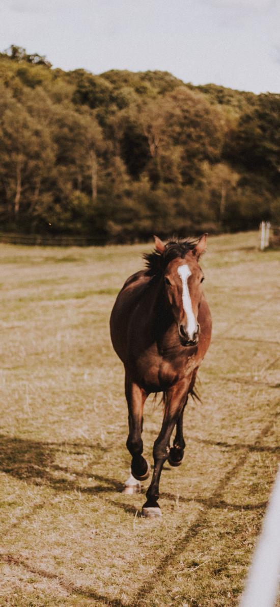 馬匹 草地 奔跑 飼養