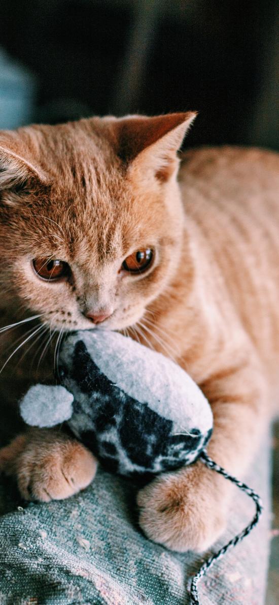 猫咪 宠物 橘猫 黄猫 玩具