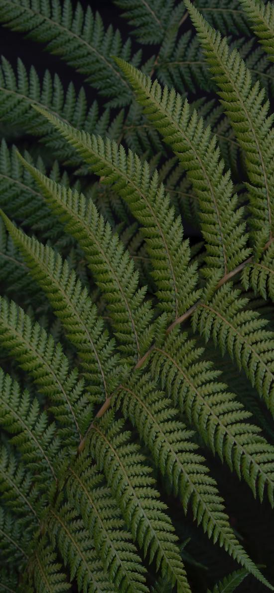 绿植 蕨类 叶子 草本