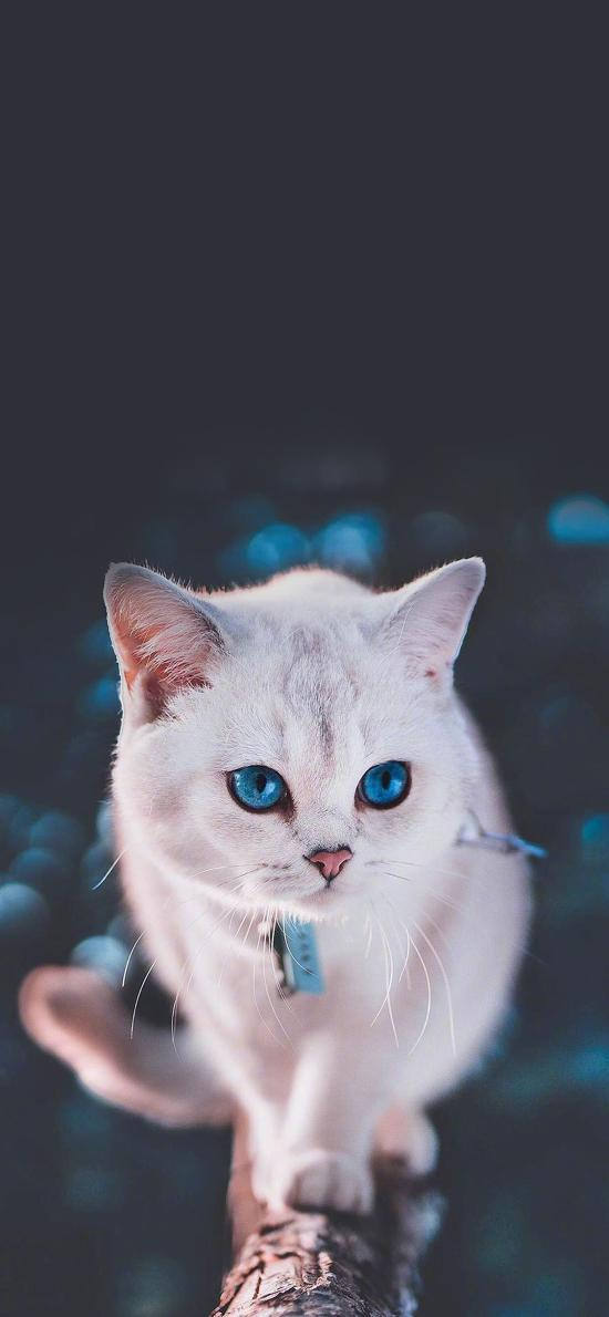 猫咪 宠物 项圈 瞳孔