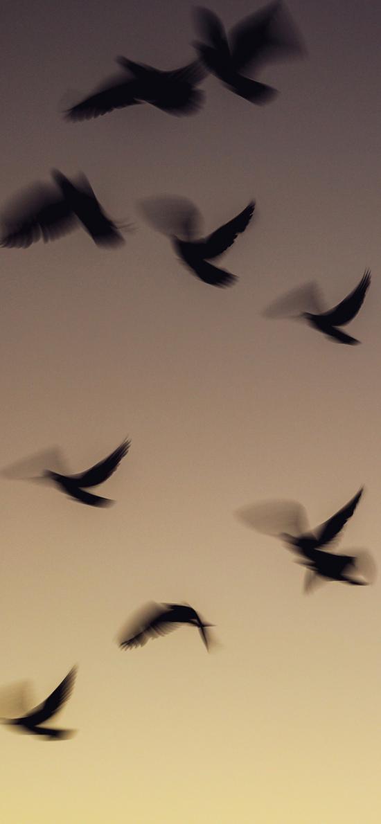 飞鸟 候鸟 群居 唯美