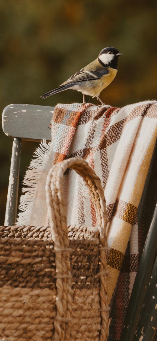 小鸟 站立 椅子 野外  编织篮