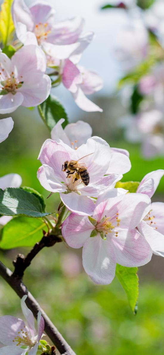 鮮花 花季 盛開 蜜蜂 采蜜
