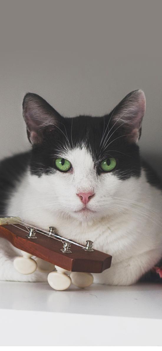 貓咪 寵物 黑白 乖巧
