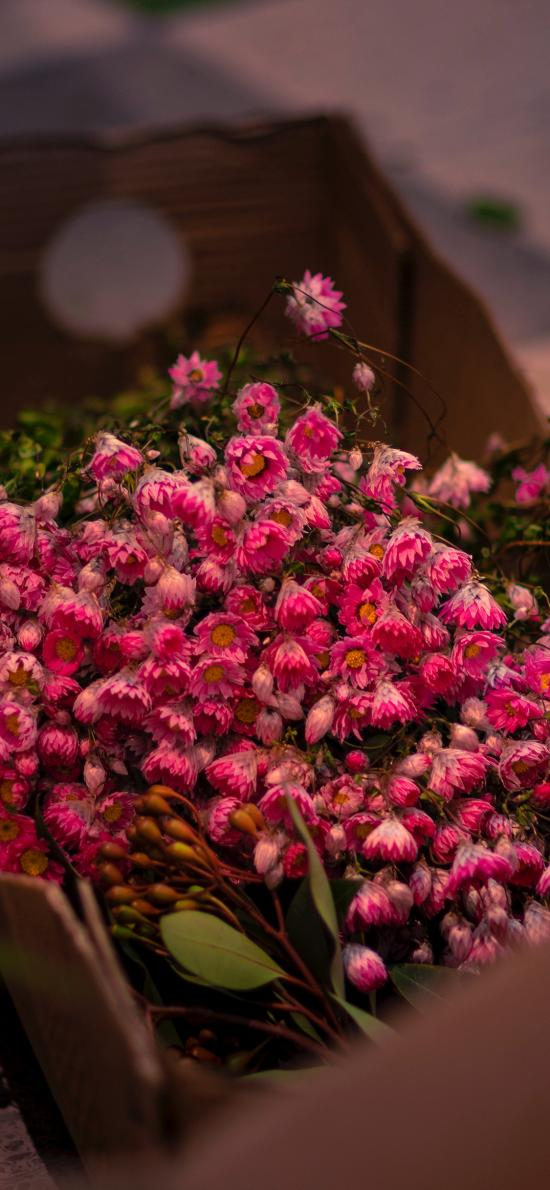 花束 鲜花 小花 密集