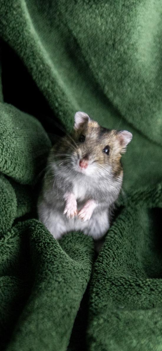 宠物 饲养 毛毯 仓鼠