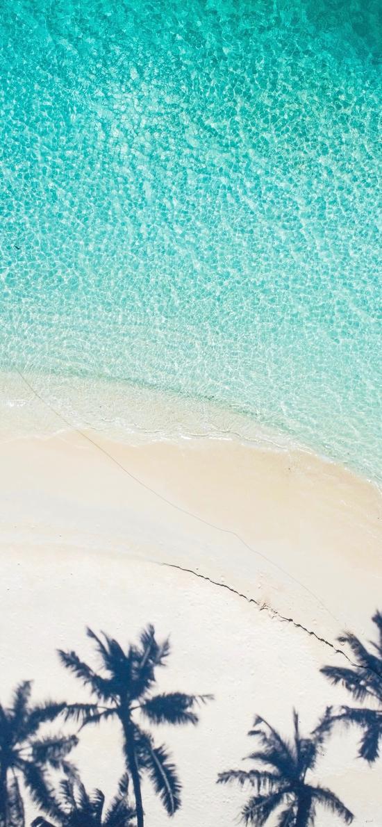 沙滩 海岸 椰树 光影 海水
