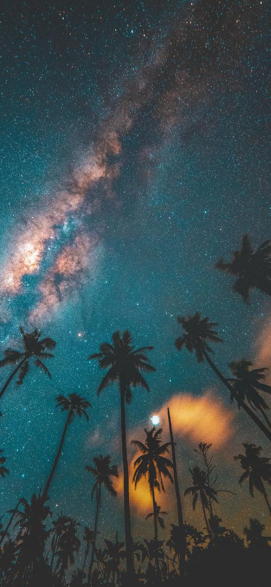天空 唯美 极光 椰树 树木 璀璨