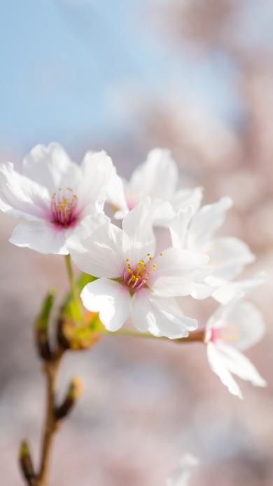 鲜花 花朵 盛开 花季