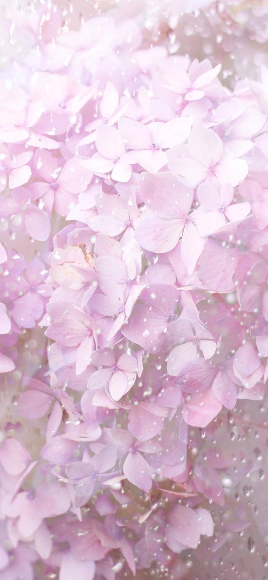 绣球花 鲜花 粉色 水滴 玻璃