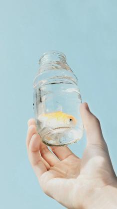 金魚 玻璃瓶 水族 藍色